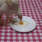 2עד מתי- וידאו מהתערוכה ווזווז 2008